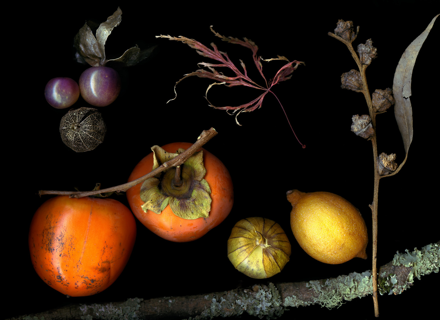 Gatherings Persimmon