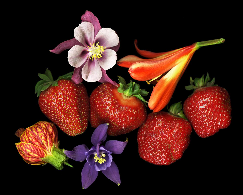Strawberry Clivia