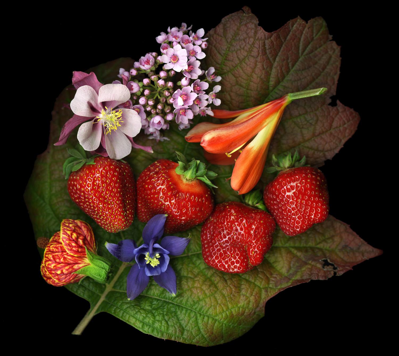 Strawberry Columbine