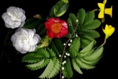 Mottled Camellia